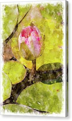 Water Hyacinth Bud Wc Canvas Print by Peter J Sucy