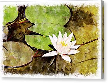 Water Hyacinth Two Wc Canvas Print by Peter J Sucy
