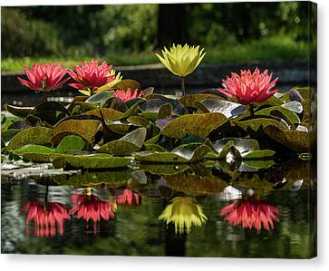 Water Lilies At The Jewel Box In Forest Park Canvas Print by Garry McMichael