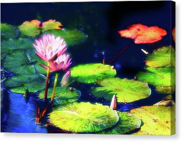 Water Lilies Canvas Print by Harry Spitz