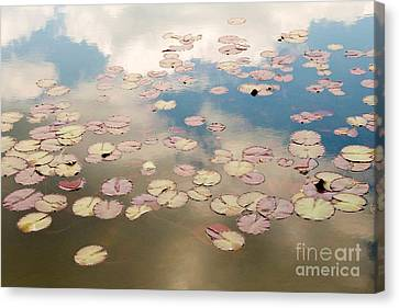 Canvas Print - Water Lilies In Schoenbrunn Vienna Austria by Julia Hiebaum