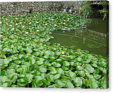 Water Lilies In The Moat Canvas Print