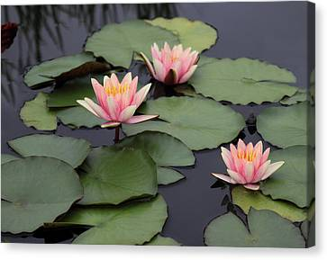 Canvas Print featuring the photograph Water Lilies by Jessica Jenney