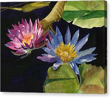 Water Lilies Canvas Print by Lynne Reichhart