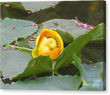 Water Lilly Canvas Print by Diane Greco-Lesser