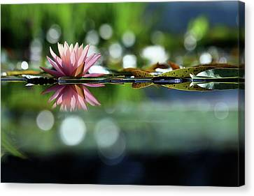 Aquatic Plants Canvas Print - Water Lily And Bokeh by Carol R Montoya