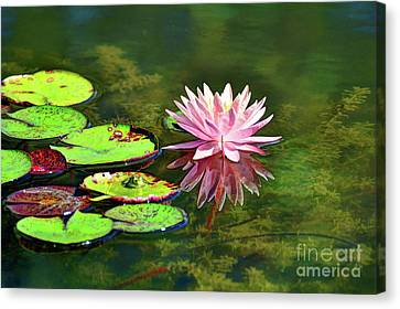 Water Lily And Frog Canvas Print by Savannah Gibbs