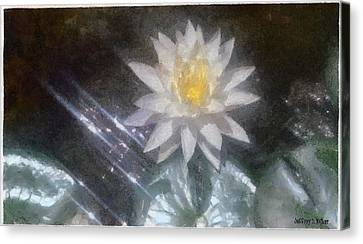 Water Lily In Sunlight Canvas Print by Jeffrey Kolker