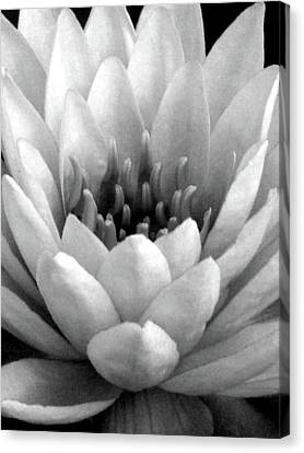 Water Lily - Portrait - Water Paper - Bw Canvas Print
