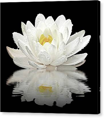 Water Lily Reflections On Black Canvas Print by Gill Billington
