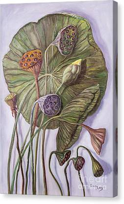 Water Lily Seed Pods Framed By A Leaf Canvas Print by Randy Burns