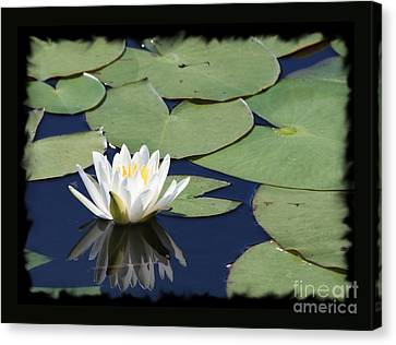 Water Lily With Black Border Canvas Print by Carol Groenen