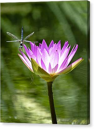 Canvas Print featuring the photograph Water Lily With Dragon Fly by Bill Barber