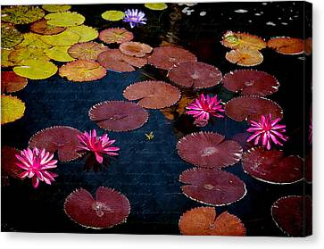 Water Lily World Canvas Print by Milena Ilieva