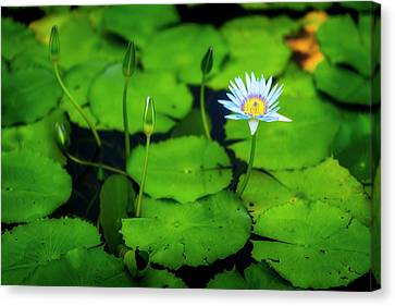 Water Logged Canvas Print by Ryan Manuel