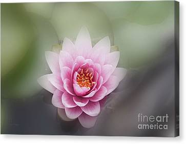 Water Lotus Flower Canvas Print