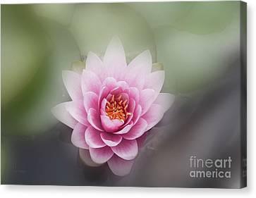 Water Lotus Flower Canvas Print by Elaine Teague