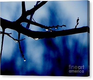 Water On Branch Canvas Print by Craig Walters
