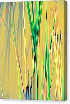Water Reeds Soft Canvas Print