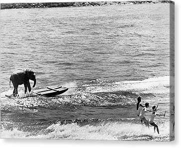 Swim Suit Canvas Print - Water Skiing Elephant by Underwood Archives