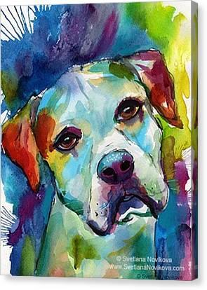 Colorful Canvas Print - Watercolor American Bulldog Painting By by Svetlana Novikova