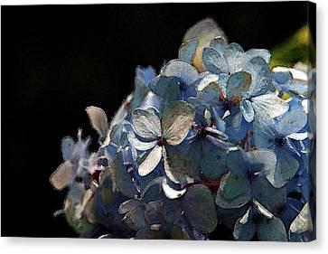 Watercolor Blue Hydrangea Blossoms 1203 W_2 Canvas Print