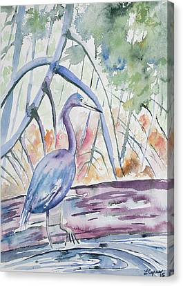 Watercolor - Little Blue Heron In Mangrove Forest Canvas Print