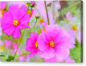 Canvas Print featuring the painting Watercolor Pink Cosmos by Bonnie Bruno