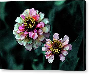 Watercolor Pink Zinnias And Smoke 2227 W_2 Canvas Print