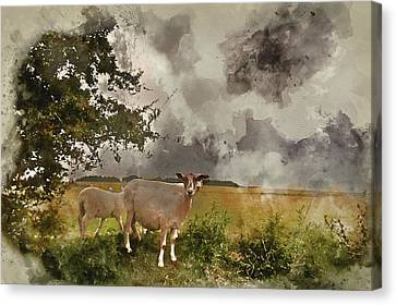 Watercolour Painting Of Farm Sheep In Landscape On Stormy Summer Day Canvas Print by Matthew Gibson