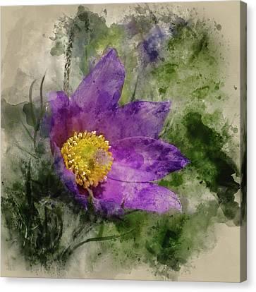 Pulsatilla Vulgaris Canvas Print - Watercolour Painting Of Pulsatilla Vulgaris Flower In Bloom by Matthew Gibson