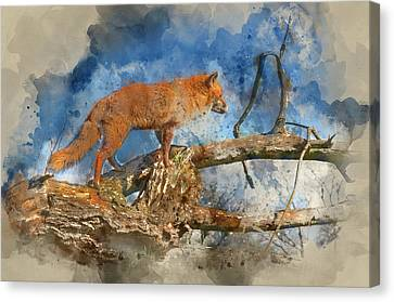 Bushy Tail Canvas Print - Watercolour Painting Of Superrb Natural Close Up Of Red Fox In N by Matthew Gibson