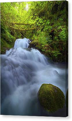 Waterfall At Shepperds Dell Falls Canvas Print by David Gn