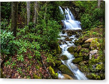 Waterfall Back Fork Of Elk River Canvas Print by Thomas R Fletcher