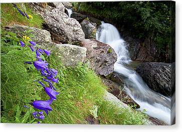 Waterfalls And Bluebells Canvas Print by Mircea Costina Photography
