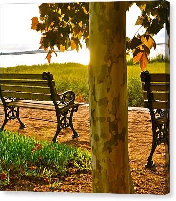 Waterfront Park Bench Canvas Print by Lori Kesten