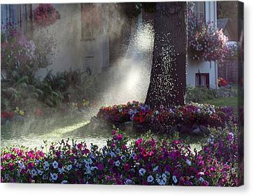 Watering The Lawn Canvas Print by Keith Boone