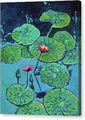 Waterlily Canvas Print by Denise Armstrong