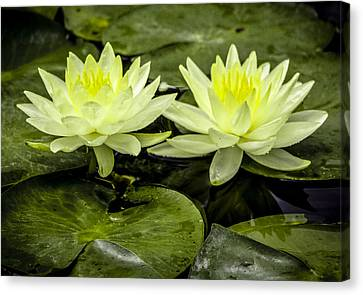 Waterlily Duet Canvas Print