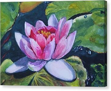 Waterlily II Canvas Print