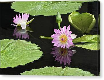 Waterlily Reflections In Dark Water Canvas Print