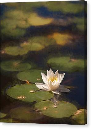 Canvas Print - Waterlily by Sheri Van Wert