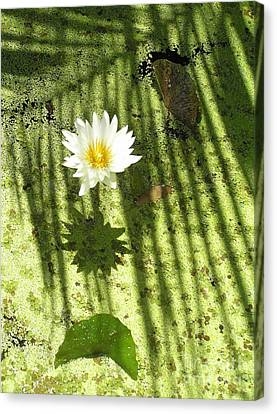 Abstracted Water Nymph Canvas Print - Waterlily Zen by Irina Davis