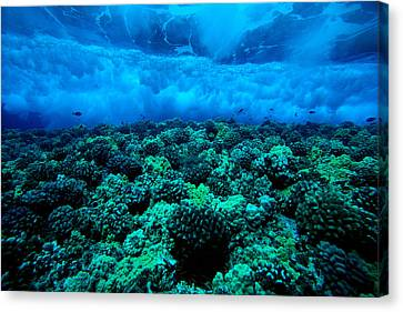 Wave Breaking Canvas Print by Dave Fleetham - Printscapes