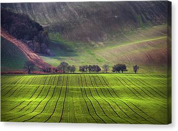Wavy Hills  Canvas Print by Jenny Rainbow