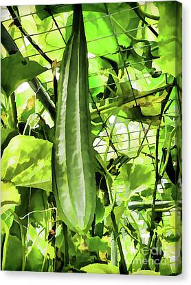 Wax Gourd Winter Melon Canvas Print by Lanjee Chee