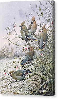 Waxwings Canvas Print by Carl Donner