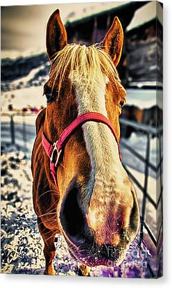Way-out Canvas Print by Alessandro Giorgi Art Photography