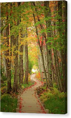 Canvas Print featuring the photograph Way To Sieur De Monts  by Emmanuel Panagiotakis
