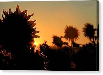 Canvas Print featuring the photograph We Are Sunflowers by Chris Berry